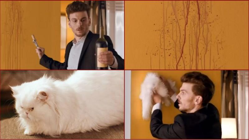 Nicio pisica n-a fost ranita la filmari, pe bune