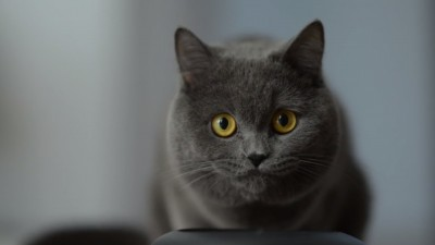 """""""Eu sunt Mauriss"""" nu e o reclama pentru pisici. #RalucaLupta"""