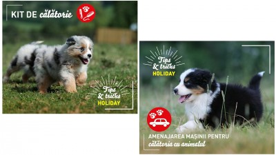 Royal Canin - Comunicare Online Campanie Summer Holiday