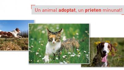 Royal Canin - Campanie adoptie