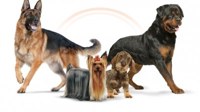 Royal Canin - Poster Caravana Dog Fest - Bucuresti