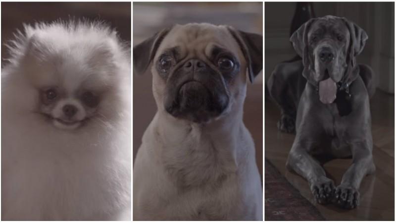 De ce au nevoie cainii de terapie. Sau de mancare