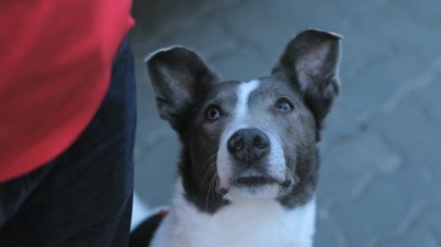 [Case Study] The Good Dogcatcher - Four Paws/ Vier Pfoten