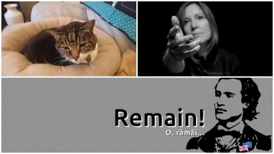 Pisicile nu vor Brexit