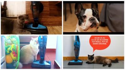 Ogilvy & Mather a lasat ultima sa campanie de comunicare pe mana animalelor de companie