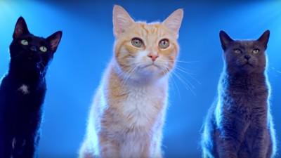Pisicile bat logica oricand, oriunde