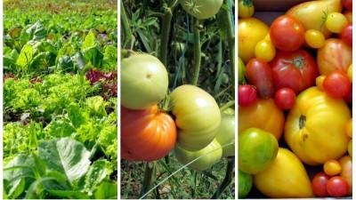 [Fermieri romani] Doi bucuresteni mutati la sat cultiva legume ecologice