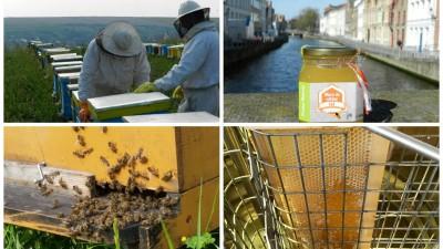 [Fermieri romani] Bzz, mierea unui apicultor de 23 de ani