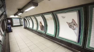 Pisici, pisici peste tot