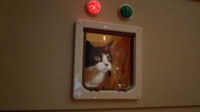 Nu vă mai certați, uitați-vă la pisici