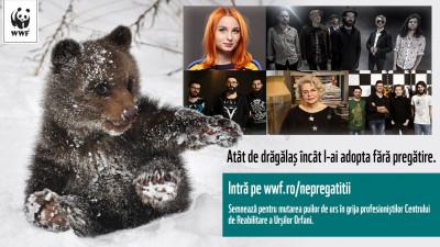 Singurul orfelinat pentru puii de urs din Europa, aflat in Romania, are nevoie de ajutor. Cum poti sprijini campania?