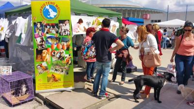 """Șase asociații vor lansa campania """"Adoptă un câine"""" la Pet Expo"""