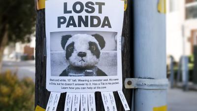 Ursii panda nu-s foarte diferiti de oameni: se pierd in orasele mari si tehnologia ii salveaza