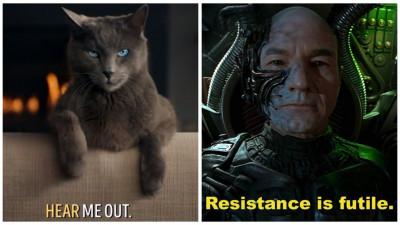 Pisici, karaoke si Star Trek