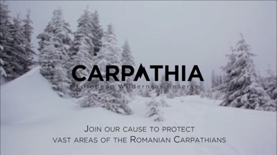 Conservation Carpathia - Oh Christmas Tree 2016
