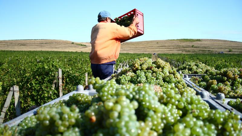 """[Domeniile vinului] 1,8 milioane de litri de vin ies din Crama Oprisor pe sezon. Gabriel Roceanu: """"Pana in 2018 am ajuns la o investitie de 12 milioane de euro"""""""