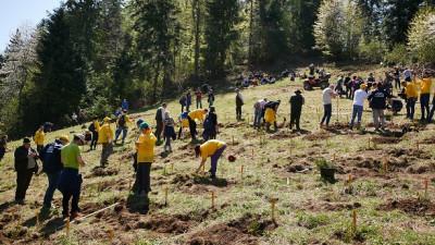 Bergenbier a strâns peste două sute de voluntari pentru cea mai amplă acțiune de reîmpădurire din România