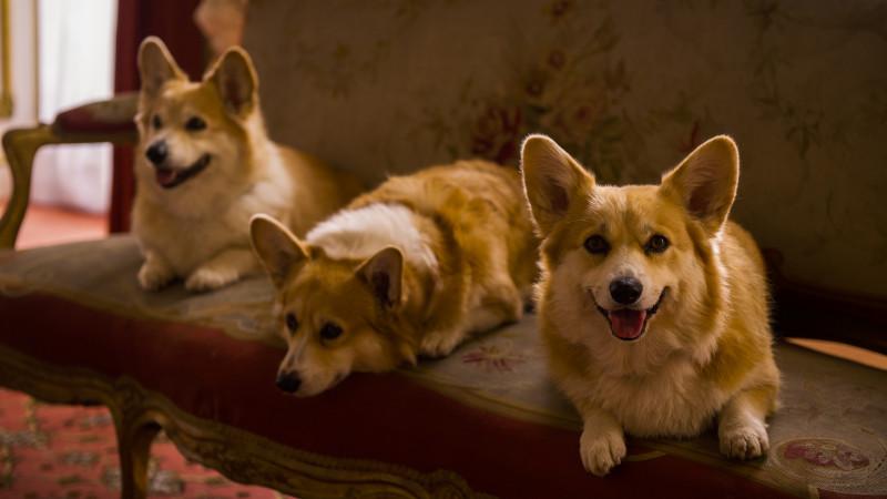 NETFLIX & WOOF: Binging-ul este pentru câini (și pisici)