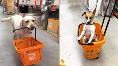 Oameni și câini, consumatori suntem cu toții
