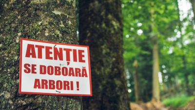 Peste 2.300 de cetățeni stau cu ochii pe pădurile virgine din România