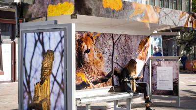WINK & The City sezonul 2 dezvăluie cum pozează sălbăticia în jungla urbană