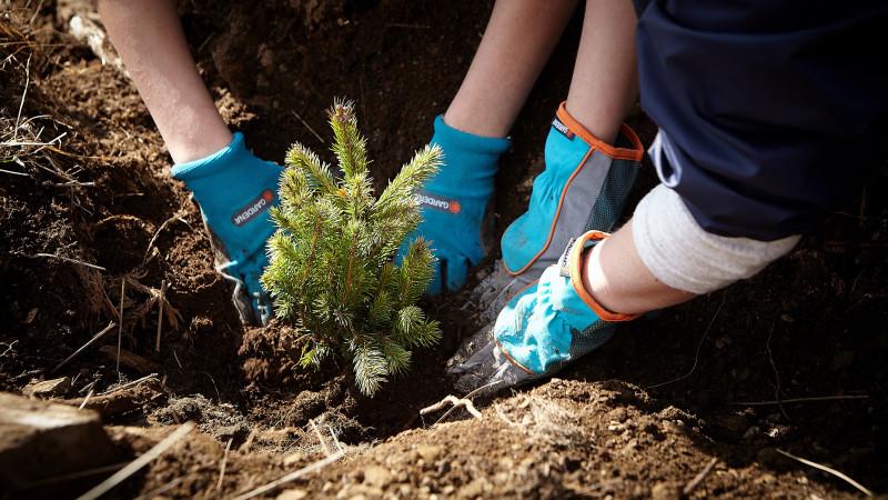Pădurea MedLife prinde rădăcini prin proiectul Facem România verde