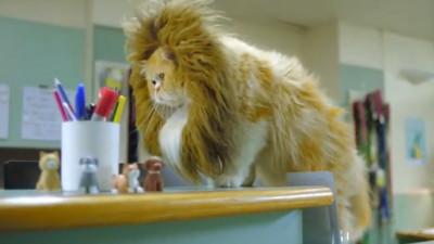 Pisici încrezute, căței ambițioși