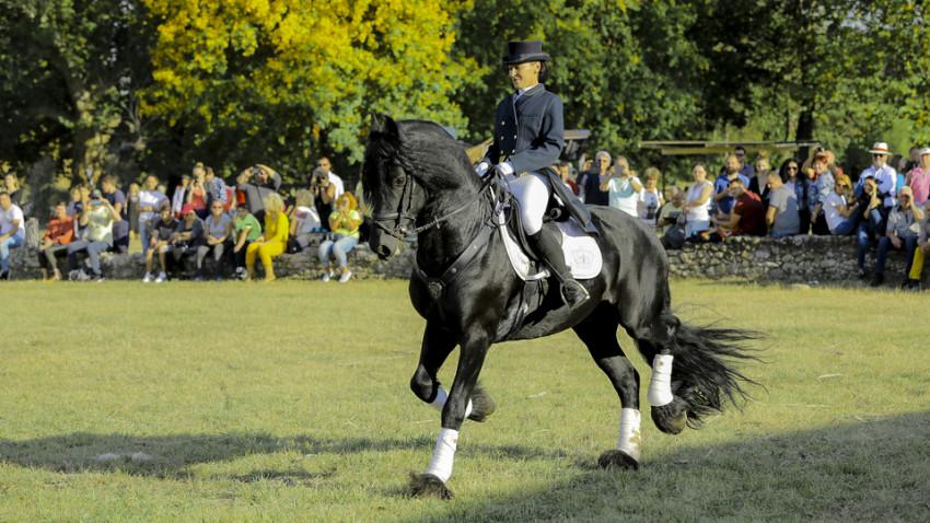 Spectacol ecvestru de top pentru 12.000 de spectatori la Karpatia Horse Show. Despre eleganța de a fi a pasionaților de cai