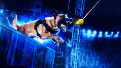 """HISTORY® transmite în exclusivitateserialul-concurs """"Câini Polițiști de Top"""""""