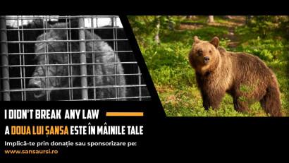 """AMP Libearty, cel mai mare sanctuar de urși bruni din lume,lansează Campania """"A DOUA ȘANSĂ"""""""