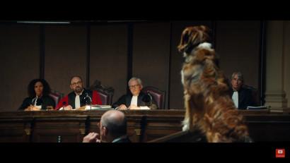 Se declară vinovat un câine