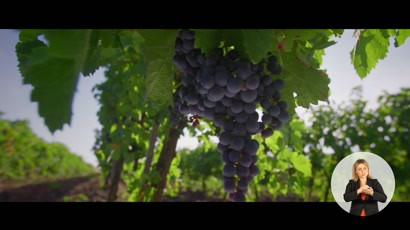 Ziua Nationala a Vinului din Republica Moldova