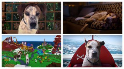 Aventurile unui câine pe internetul omenesc