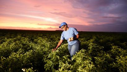 PepsiCo anunță un nou obiectiv pentru 2030: extinderea practicilor de agricultură regenerabilă pe 7 milioane acri (2,8 milioane hectare)