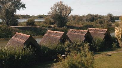"Exploreaza Delta Dunarii – episodul 2: Stufarisul - ""casa"" pentru atatea specii"