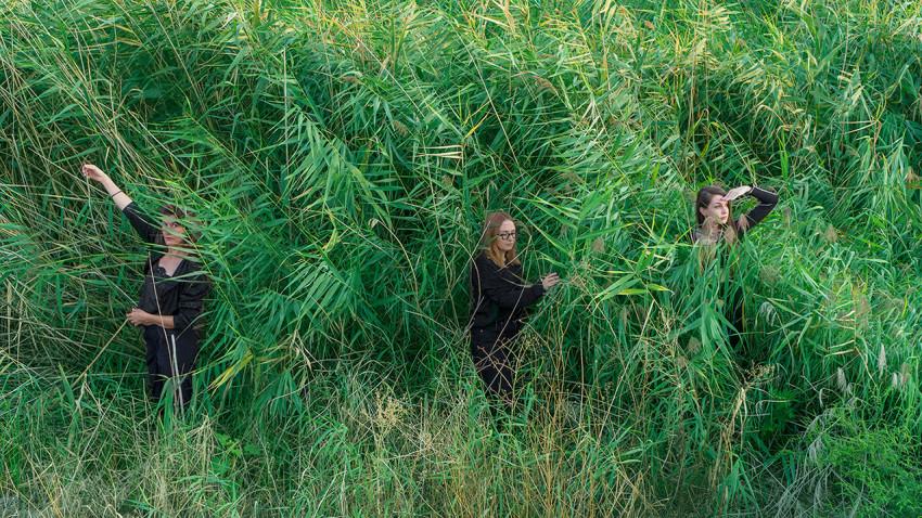 BECOMING LANDSCAPE. Parcul Natural Văcărești, reconfigurat ca scenă de un grup de muzicieni și performeri